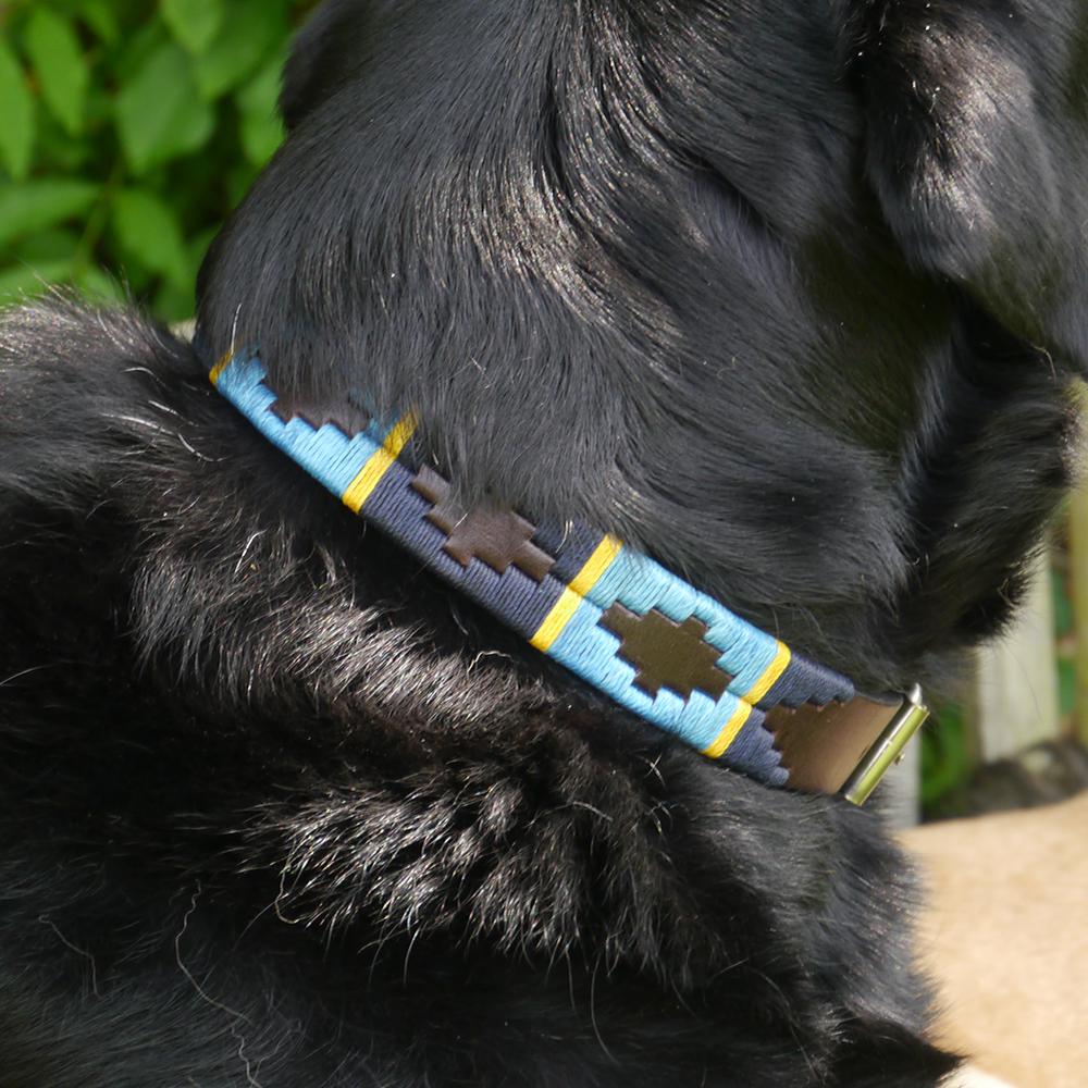 Argentinian Dog Collar