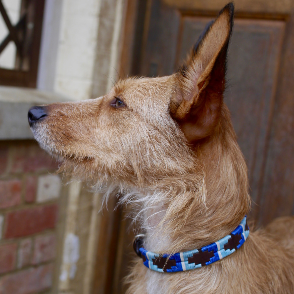 Lucia Pampi Argentinean Polo Dog Collar