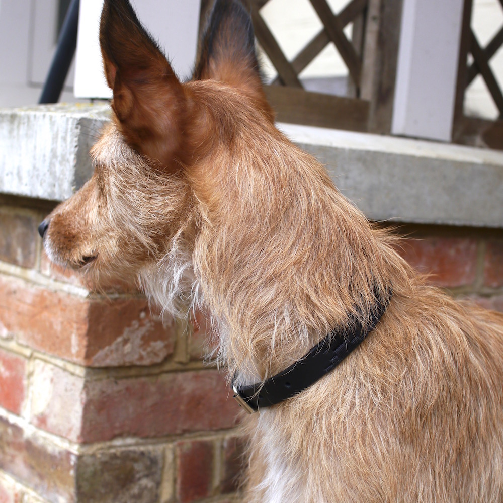 Knightsbridge Polo Dog Collar